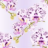 Seamless texture stem with flowers and buds beautiful orchid with dots purple and white Phalaenopsis closeup on a white backgro. Und vintage vector vector Royalty Free Stock Photo