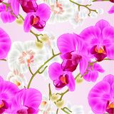 Seamless texture stem with flowers and buds beautiful orchid Phalaenopsis purple and white closeup vintage vector illustration. Editable hand draw Stock Images