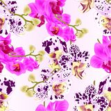 Seamless texture stem with flowers and  buds beautiful  Orchid purple and spotted Phalaenopsis  closeup  vintage  vector editable. Illustration hand draw Stock Images