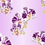 Seamless texture stem Orchid Phalaenopsis spotted white and purple flowers and buds tropical plants vintage vector botanical illu Stock Photography