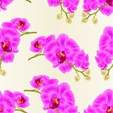 Seamless texture stem orchids flowers purple  Phalaenopsis tropical plant vintage vector botanical illustration for design editabl. E hand draw Royalty Free Stock Photo