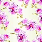 Seamless texture stem orchids flowers purple and white   Phalaenopsis tropical plant    vintage vector botanical illustration edit Stock Images