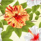 Seamless texture stems yellow and white hibiscus tropical flowers natural background vintage vector illustration editable. Hand draw vector illustration