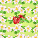 Seamless texture of strawberries with flowers and leaves vector Royalty Free Stock Photo
