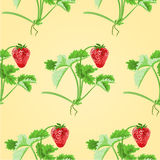 Seamless texture of strawberries with leaves vector Royalty Free Stock Image