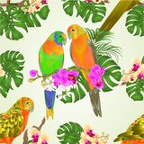 Seamless texture Sun Conure Parrots tropical exotic birds with beautiful orchids and philodendron vector illustration editable stock illustration