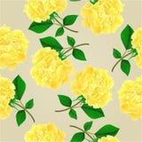 Seamless texture Tea rose vector Royalty Free Stock Image