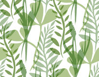Seamless texture with transparent plants and herbs Stock Image
