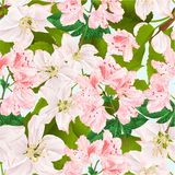 Seamless texture Twig of apple tree with flowers and light pink rhododendron blue background vintage vector illustration editable royalty free illustration