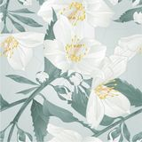 Seamless texture twig  flower jasmine and buds crack vintage vector illustration  editable. Hand draw Royalty Free Stock Photos