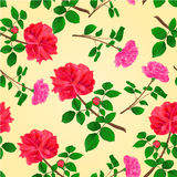 Seamless texture twig red and pink roses vector. Seamless texture twig red and pink roses  with leaves and bud vector illustration Royalty Free Stock Photography