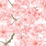 Seamless texture twig tree sakura blossoms vintage natural pink background vector illustration editable Stock Image