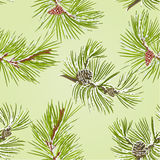 Seamless texture two pine branches with pine cones with snow vector Stock Photography