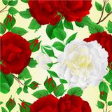 Seamless texture two purple and white rose vintage vector illustration editable Stock Image