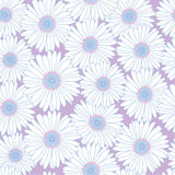 Seamless texture with white meadow flower Stock Photo
