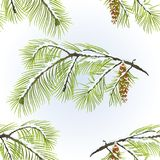 Seamless texture white Pine branch with pine cone  winter snowy natural background vintage vector illustration editable Royalty Free Stock Image