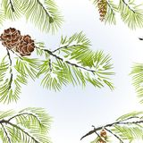 Seamless texture white Pine branches with pine cone winter snowy natural background vintage vector illustration editable. Hand draw Royalty Free Stock Photos