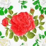 Seamless texture white and pink roses with buds and leaves vintage   Festive background vector botanical illustration. Hand draw Royalty Free Stock Photo