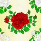 Seamless texture white and red Roses with buds and leaves vintage Festive background vector botanical illustration editable. Hand draw Royalty Free Stock Photography
