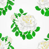 Seamless texture white Rose with buds and leaves vintage   Festive background vector. Botanical illustration hand draw Royalty Free Stock Images