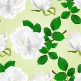 Seamless texture white rose flower stem  nature background vintage  vector  illustration editable Royalty Free Stock Photos