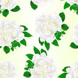 Seamless texture white rose and leaves vintage  Festive background vector illustration editable. Hand draw Royalty Free Stock Photo