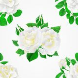 Seamless texture white Roses with buds and leaves vintage   Festive background vector botanical illustration editable Royalty Free Stock Photos