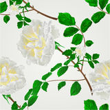 Seamless texture  white roses vector. Seamless texture rose white flower stem with leaves and blossoms vector illustration Royalty Free Stock Photo