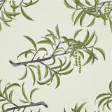 Seamless texture Willow branch with catkins vector Royalty Free Stock Photo