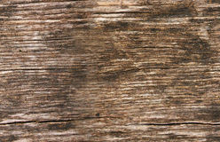 Seamless texture of wood Stock Photography