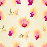 Seamless texture yellow Orchid Phalaenopsis  flower closeup  vintage  vector editable illustration Royalty Free Stock Photography