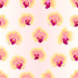 Seamless texture yellow Orchids Phalaenopsis beautiful flowers  vintage  vector editable illustration Royalty Free Stock Photos