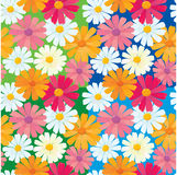 Seamless textures daisy flowers Royalty Free Stock Photo