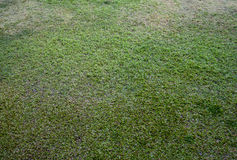 Seamless Tileable of Green Grass Stock Photography