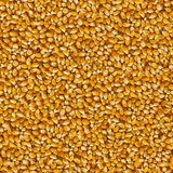 Seamless Tileable Texture of Corn Beans. Stock Image