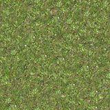 Seamless Tileable Texture of Forest Lawn. Stock Photography