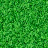 Seamless Texture. Green Meadow Grass. Royalty Free Stock Photos