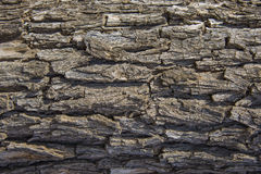Seamless tree bark background. Brown tileable texture of the old . Stock Photos