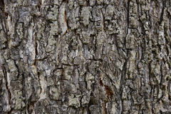 Seamless tree bark background. Brown tileable texture of the old Royalty Free Stock Image