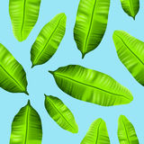 Seamless tropical banana leaves pattern on blue background Stock Image