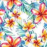 Palm leaf paradise background Royalty Free Stock Photo
