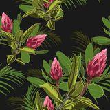 Seamless tropical flower pattern background. Tropical protea flowers, jungle leaves, on light background. Vector seamless tropical pattern, vivid tropic foliage Stock Images