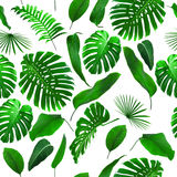 Seamless Tropical Jungle Leaves Background. Can be used as wallpaper royalty free stock image