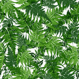 Seamless tropical leaves, fern plant illustration. On white background Royalty Free Stock Photo