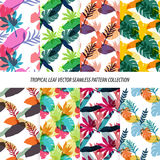 Seamless Tropical Leaves Floral Vector Pattern Background Wallpaper Design Stock Photos