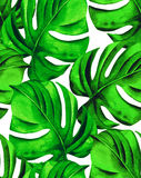 Seamless tropical leaves. Seamless monstera leaves pattern. tropical palm leaves in allover composition. design for fashion or interior. beautiful botanical Stock Image