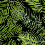 Seamless Tropical Palm Leaves Background Royalty Free Stock Image