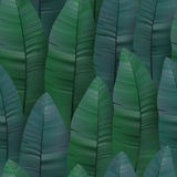 Seamless tropical pattern with banana leaves. Vector illustration. Royalty Free Stock Images
