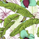 Seamless tropical pattern with banana palms. Vector illustration. Royalty Free Stock Image