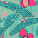 Seamless tropical pattern with banana palms. Vector illustration. Stock Photography